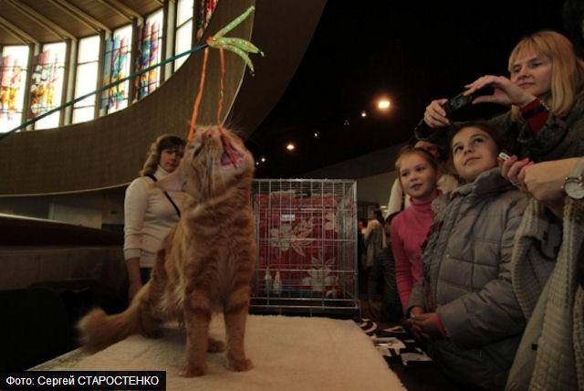 Выставка кошек-тяжеловесов в Украинском доме