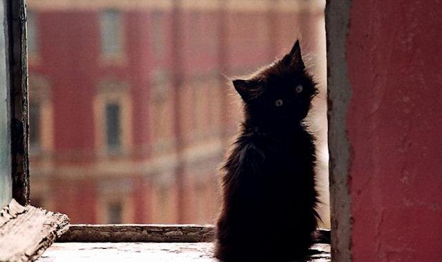 Котят назвали именами звёзд