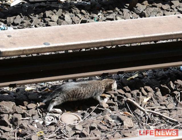 Котята-диверсанты парализовали работу нью-йоркского метро