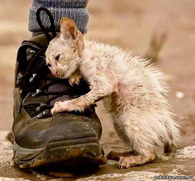 Котёнка спасли из ледяного плена