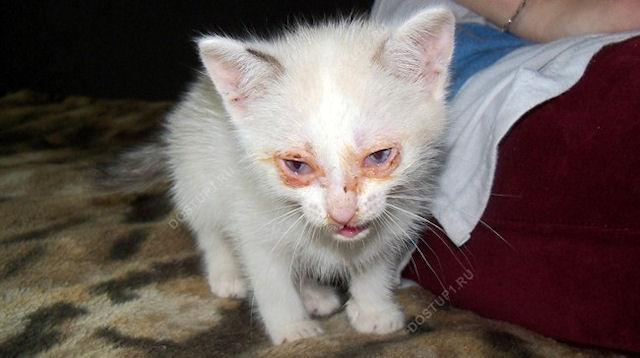 Котёнок из унитаза