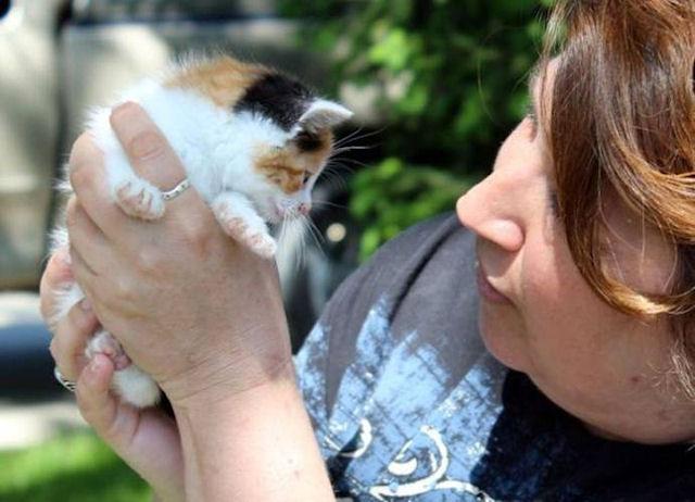 Котёнок, переживший торнадо