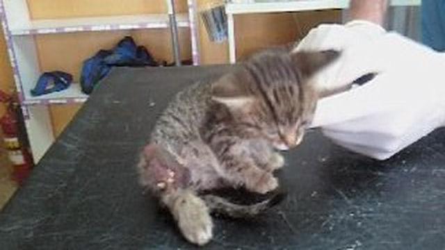 Самарский котёнок выжил после нападения ворон