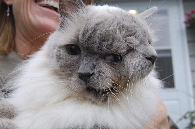 В США живёт котёнок с 2-мя мордами