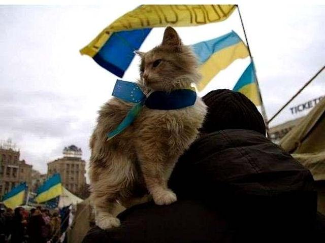 Котёнок спасся благодаря флагу Украины