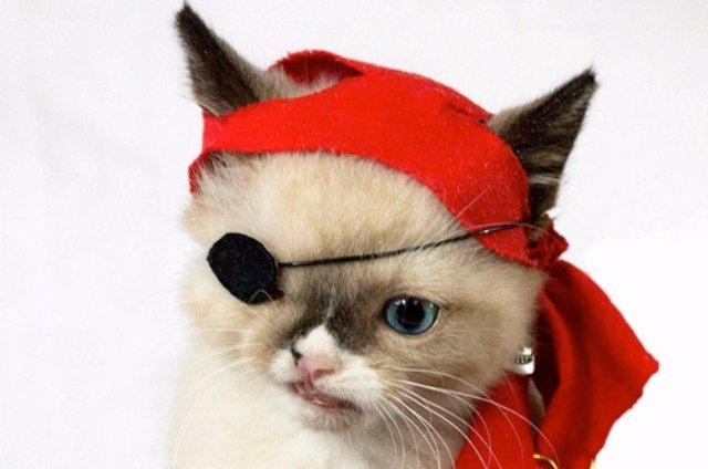 Котёнок стал «пиратом» из-за нападения енота