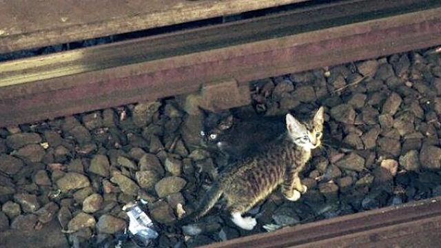В метро Санкт-Петербурга пассажиры спасли котёнка, который упал на рельсы