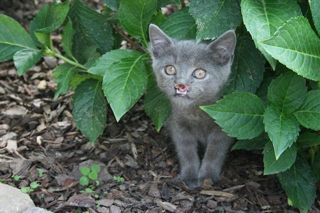Котёнок-вампир нашёл семью