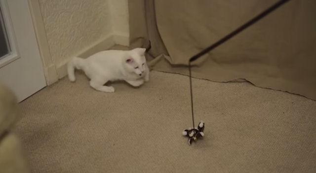 Котёнок Харви – инвалид, передвигающийся на задних лапах