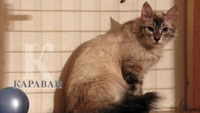 В Астане на деньги добровольцев создан приют для кошек «Ковчег»