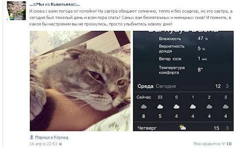 Кыштымский кот Бонифаций стал звездой прогноза погоды
