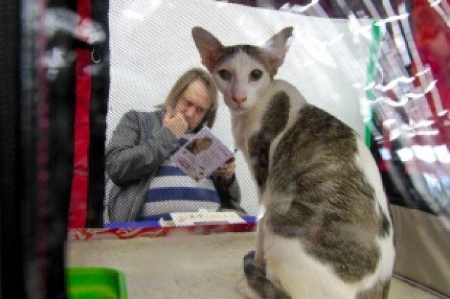 Выставка кошек «Легенда Югры» стартует в Ханты-Мансийске 10 мая