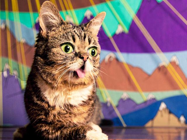 Кошечка Лил Баб стала звездой Интернета