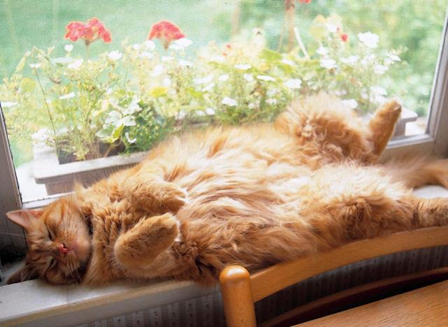 Кошки и собаки в США страдают от лишнего веса