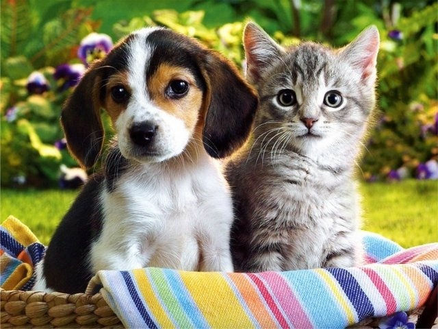 Украинцы выбирают собак, но любовь к кошкам не ослабевает