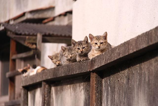 Во Львове могут быть легализованы бездомные кошки