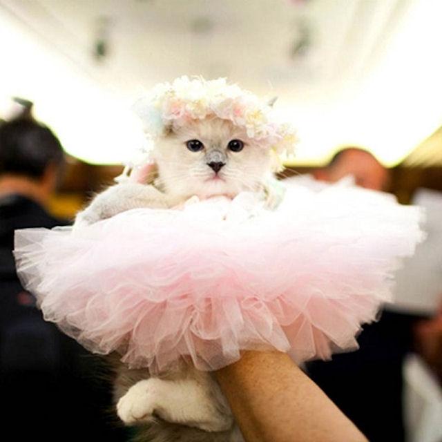 В Санкт-Петербурге открыли магазин свадебных нарядов для кошек