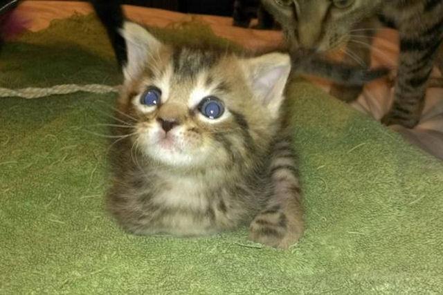 Меркьюри – история котёнка-инвалида