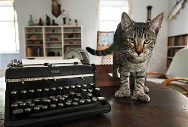 В однокомнатной квартире киевлянки нашлось место для 44-х котов