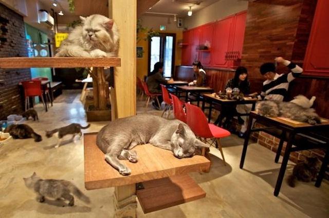 Первое «кошачье» кафе в Турине