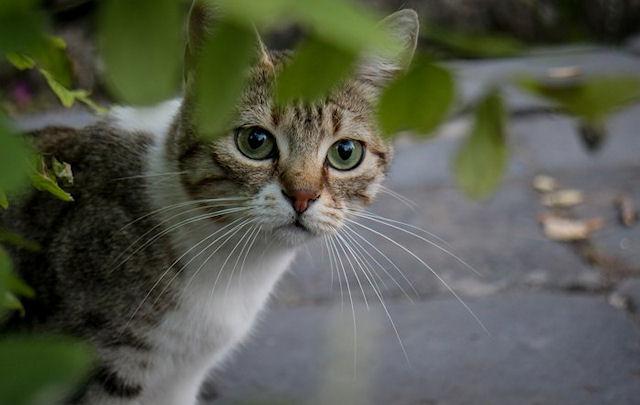 Молдавский кот снабжал заключенных наркотиками