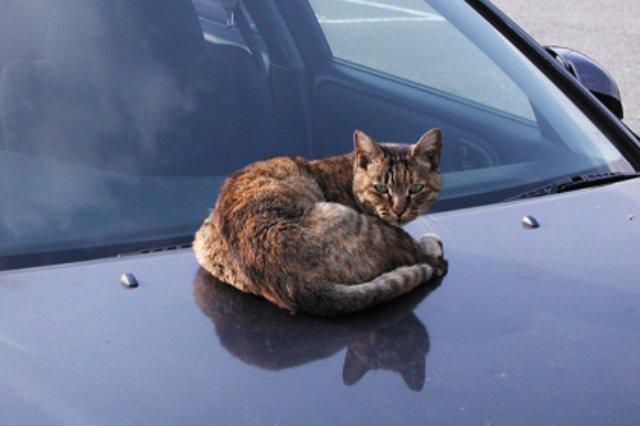 Мужчина спас кота, застрявшего около автомобильного глушителя