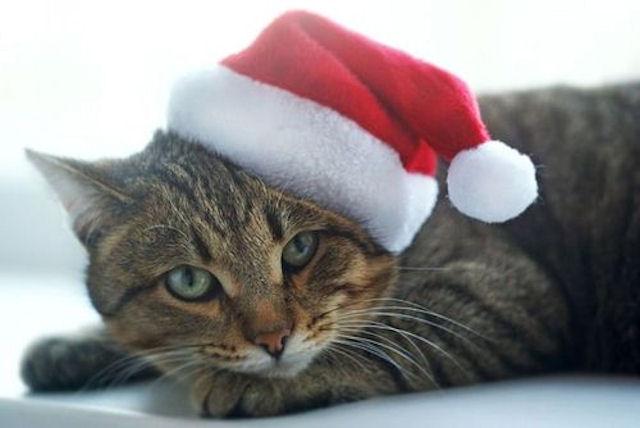 На Алтае выбрали самых красивых котов
