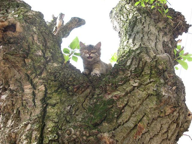 Жители Латвии не пожалели денег на спасение котёнка
