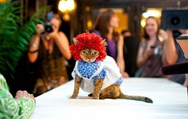 Неделя кошачьей моды Нью-Йорке