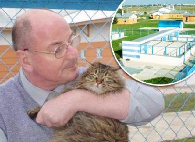 Немцы откроют в Одессе кошачий приют