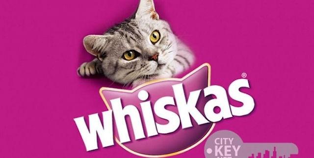 В Минске наблюдается нехватка кошачьего корма