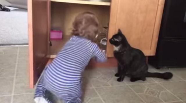 Новая звезда YouTube - кот-тюремщик