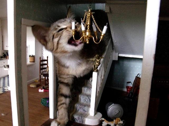 Новой звездой интернета стал кот-разрушитель