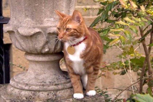 Новый кот осваивает резиденцию Черчилля