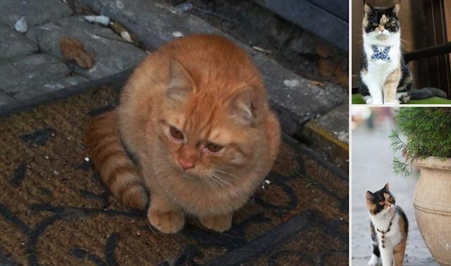 Знаменитая одесская кошка оказалась на улице