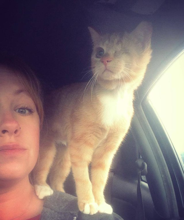 Одноглазая кошка Истер получила второй шанс на жизнь