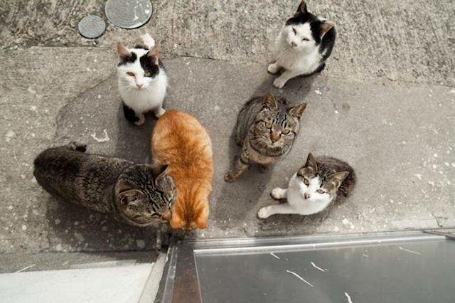 Из-за любви к кошкам японец ограбил 32 дома
