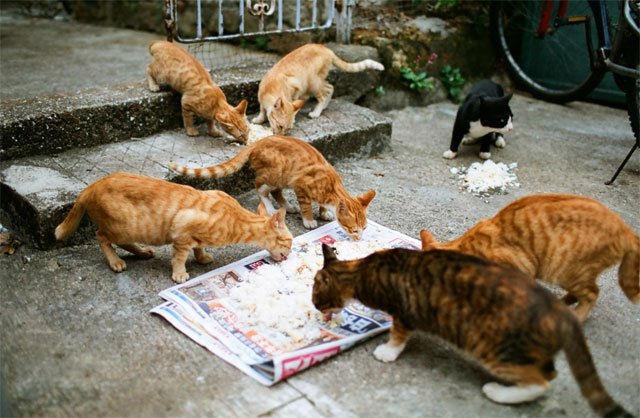 Жительницу Франции оштрафовали за кормление бездомных кошек