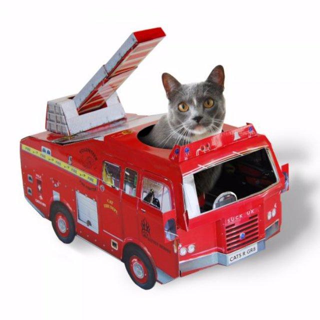Отважный Томас предупредил хозяина о пожаре