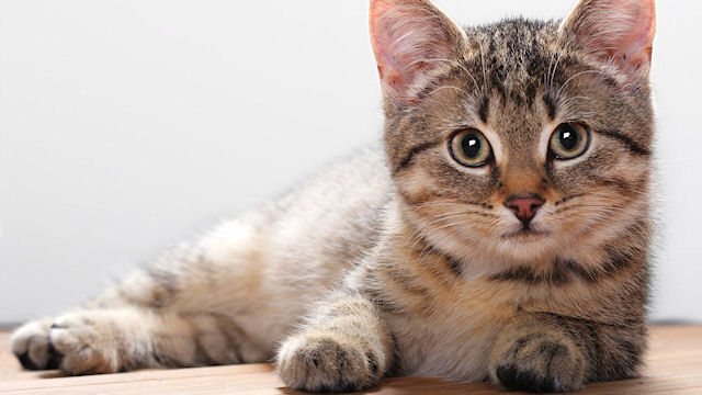 Пациентов итальянских больниц навещают кошки