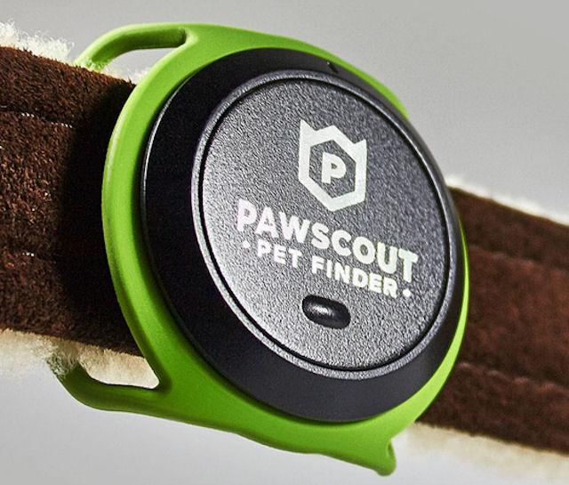 Поиск домашних котов облегчится благодаря электронному устройству от Pawscout