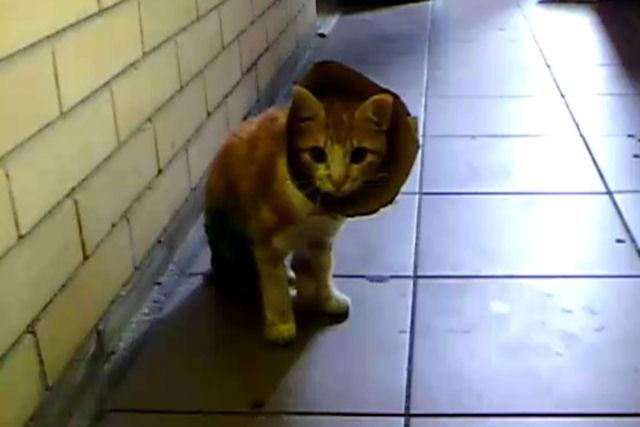 Кошке потребовалась пересадка кожи после аварии