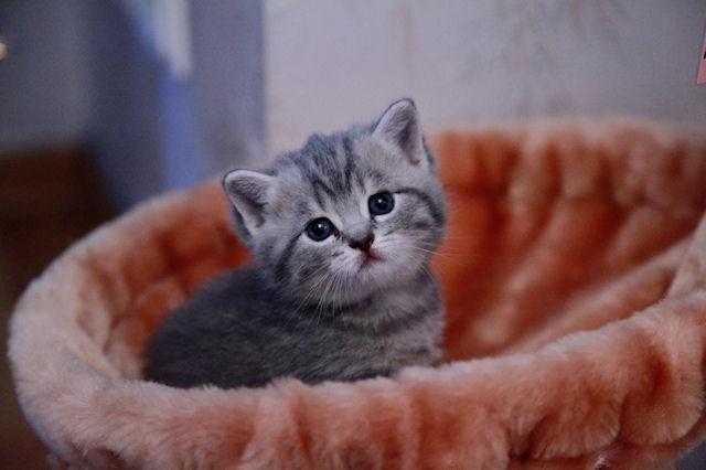 Защитники животных попросили жителей Перу перестать есть кошек