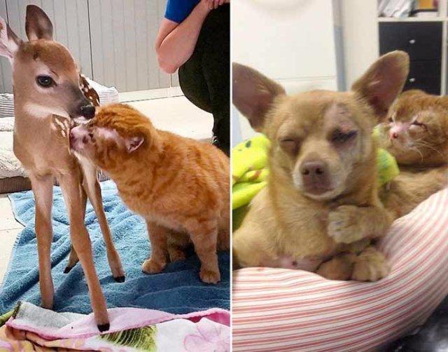 Переживший пожар кот помогает больным животным