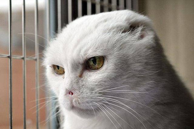 «Почтовая» кошка