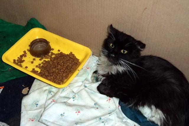Кошку, выжившую под капотом автомобиля, назвали Марусей