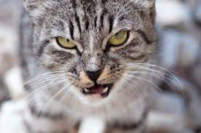 Полицейские выследили кошку, убившую 18 утят