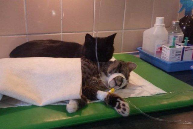 Польский кот стал медбратом