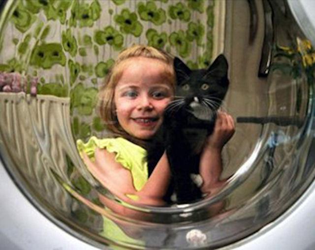 Постиранный котёнок