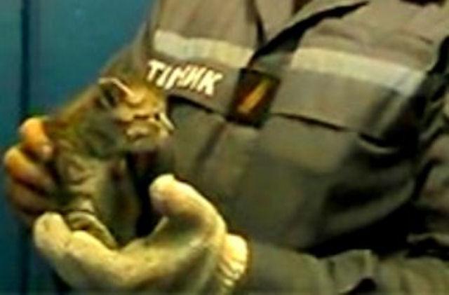 Пожарные спасли котёнка, застрявшего в вентиляционной шахте